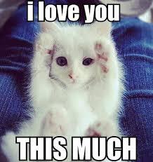 I Love You I Love You This Much! via Relatably.com