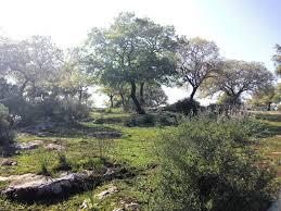 Image result for תמונות אלוני אבא