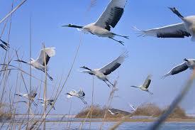 Τι δείχνουν  οι συνήθειες των  πτηνών;