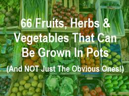 Image result for fruit and veg growing