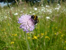 Image result for wildflower bees butterflies meadow
