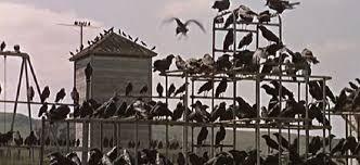 Resultado de imagem para os pássaros