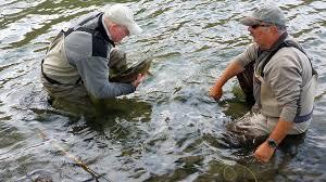 Skagit vs. Scandi - The Fly <b>Fishing</b> Shop