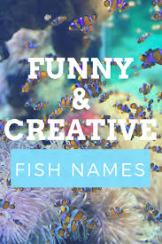 300+ <b>Funny</b> and Clever <b>Fish</b> Names | PetHelpful