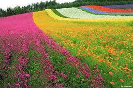 Resultado de imagen de flores campo