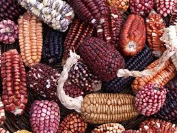 Mais d'où viennent vraiment les légumes anciens ? Images?q=tbn:ANd9GcQBPZbtALJByBN-vbwaeLwR_V6hmcPtNN_VPMEzVMyn4TOAmCOv