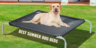 6 Best <b>Summer Dog Beds</b> – Cooling, Breathable & Elevated