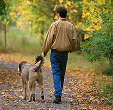 ¿Cómo pasear un perro?