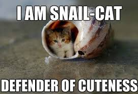 5 Cutest Cat memes ever! | Socially Fabulous – & – Fabulously Social via Relatably.com