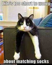 Cats (LOL, Macros, interesting, videos) on Pinterest | Grumpy Cat ... via Relatably.com
