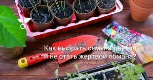 Как выбрать <b>семена цветов</b> и не стать жертвой обмана? Фото ...