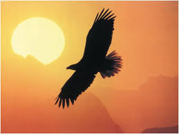 Image result for pictures of eagles in sky