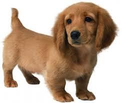 Ποια είδη Κακοήθειας αναπτύσσονται στο Νεφρό του σκύλου;