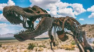 Earth - Meet Nanotyrannus, the dinosaur that never really ... - BBC