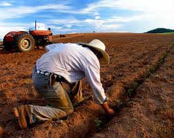 Image result for pictures of farmer sowing seed
