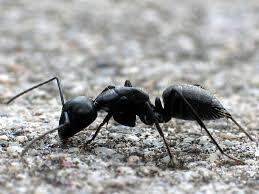 """Résultat de recherche d'images pour """"fourmis"""""""