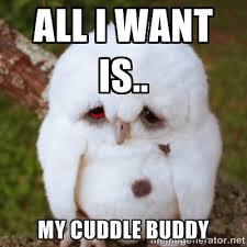 All I want is.. My cuddle buddy - Sad Owl Baby | Meme Generator via Relatably.com