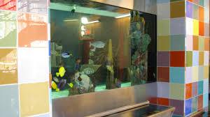 aquarium design for home and office aquarium office