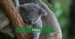 Frequently asked questions   Australian <b>Koala</b> Foundation
