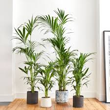 Indoor <b>Plants</b> | Delivered In London | Patch
