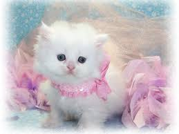 Baby cats images?q=tbn:ANd9GcQ