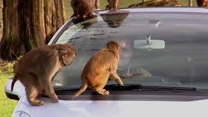 IET: <b>Beware</b> of the <b>Monkeys</b>. - YouTube