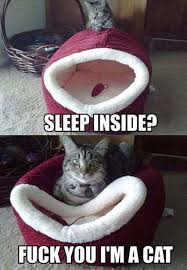 Funny cat meme | Funny Dirty Adult Jokes, Memes & Pictures via Relatably.com