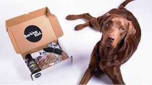 accessories glasgow box: scots start up says dog beer and bowties are new must haves