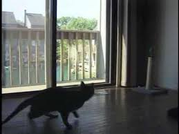 Bring an <b>Outdoor Cat</b> In - YouTube