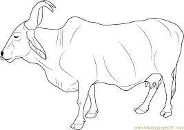 Small Picture Cow Coloring Pages All Coloring Pages
