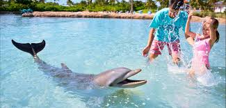 <b>Rise & Shine</b> with Dolphins | Early Riser Dolphin World Experience ...