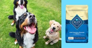 Best dry <b>dog</b> food, according to experts and veterinarians