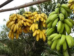 "Where We Got the Term ""<b>Banana Republic</b>"" | Smart News ..."