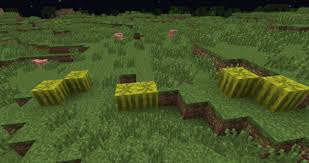 Image result for minecraft melon