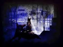 Resultado de imagen de perro ladrando en la oscuridad