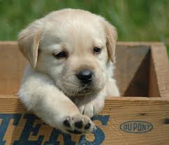 Image result for cute pup