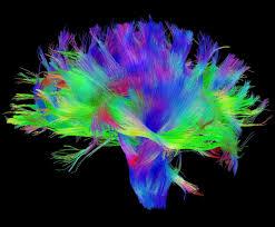 Traits Of A <b>Beautiful Mind</b> - JC Wandemberg Ph.D. - Medium
