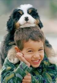 Ποια είναι τα χαρακτηριστικά που πρέπει να έχουν οι σκύλοι για παιδιά;