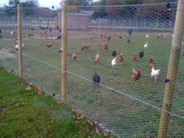 Image result for poultry fencing