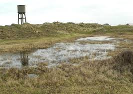 Nardurus maritimus (eenzijdig baardgras) in Nieuwpoort (W.-Vl ...