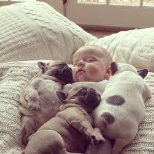 les plus beau chiens Images?q=tbn:ANd9GcQDXeUJ-U_PAbUquXqgd-fdkM3bumsGEQcK4fGjAg4oYcgu4aRt
