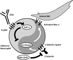 vaso occlusion in sickle cell disease pathophysiology and novel figure