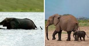 30 <b>Baby Elephants</b> That Will Instantly Make You Smile | Bored Panda
