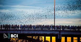 <b>Bat</b> Conservation International / Ending <b>Bat</b> Extinctions Worldwide