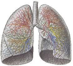 longen een type cellen die reageren op geuren