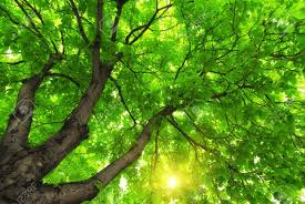"""Résultat de recherche d'images pour """"arbre vert"""""""