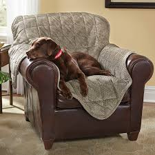 duke is not dumb the big leather chair is the best dog seat in the house he knows this to be the truth and how thoughtful of you to place a convenient big dog furniture