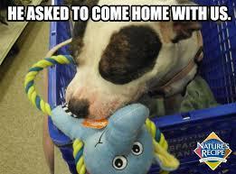 A likely story…#dog #meme #funny #LOL | petpedia | Pinterest via Relatably.com
