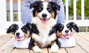 Custom <b>Pet Slippers</b> - <b>Dogs</b> & Cats | Cuddle Clones