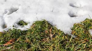 Image result for the great thaw